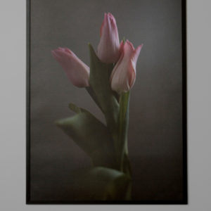 Subtile Tulips